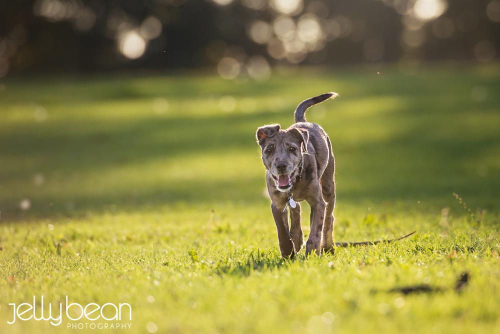 Pet photography Northampton