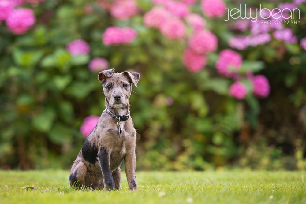 Northampton pet photographer