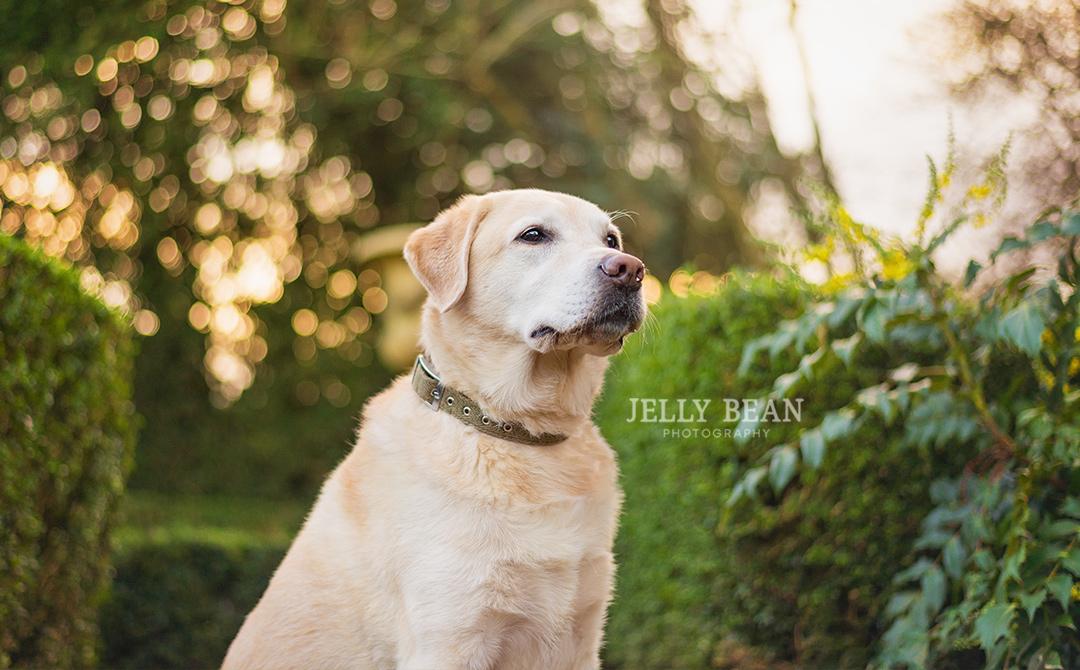 UK pet photography