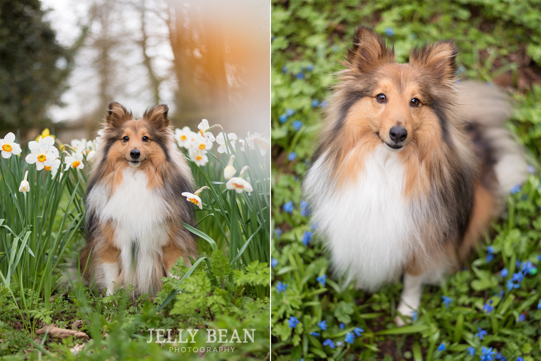 Dog in daffodils and flowers