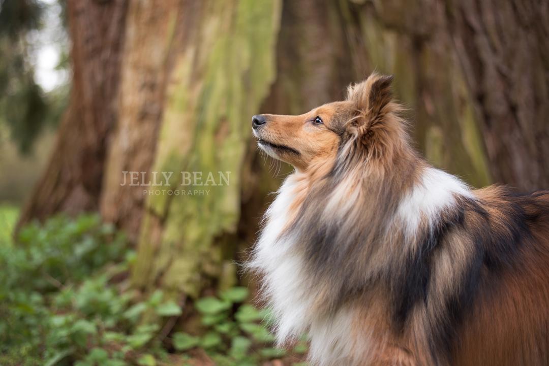 Dog at Castle Ashby Northampton