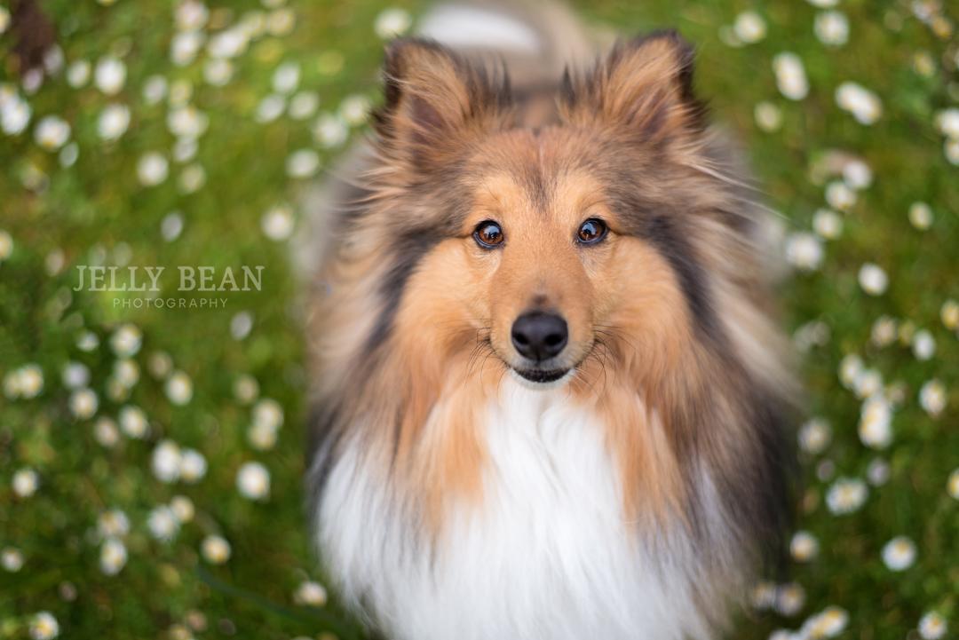UK dog photographer