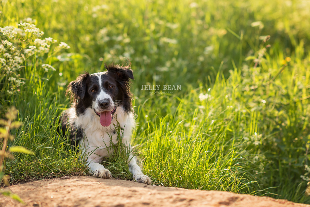 pet portrait photography