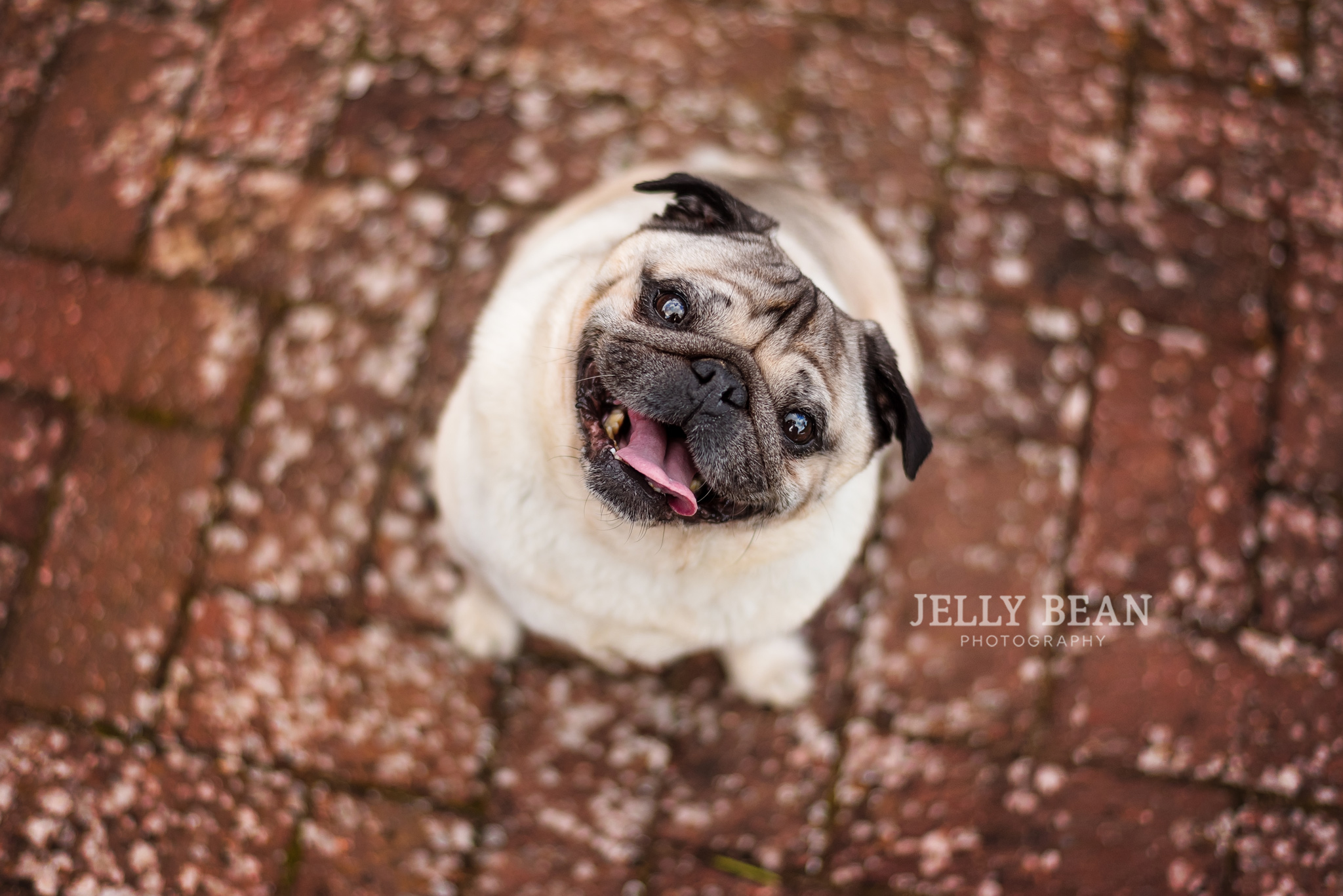 SIT. STAY. SMILE | TOP TIPS FOR TAKING BETTER PHOTOS OF YOUR DOG