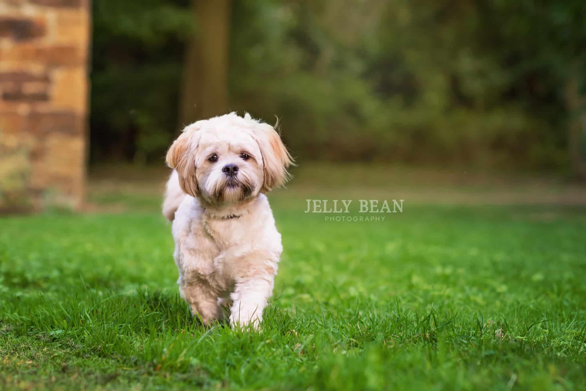 Teddy the puppy