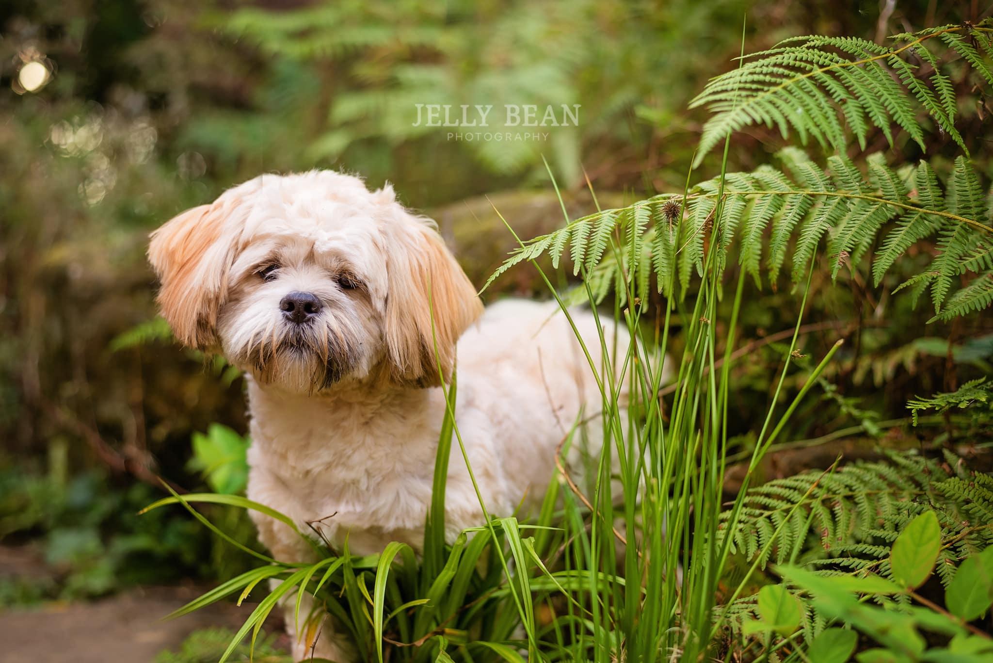 puppy peeking in the grass