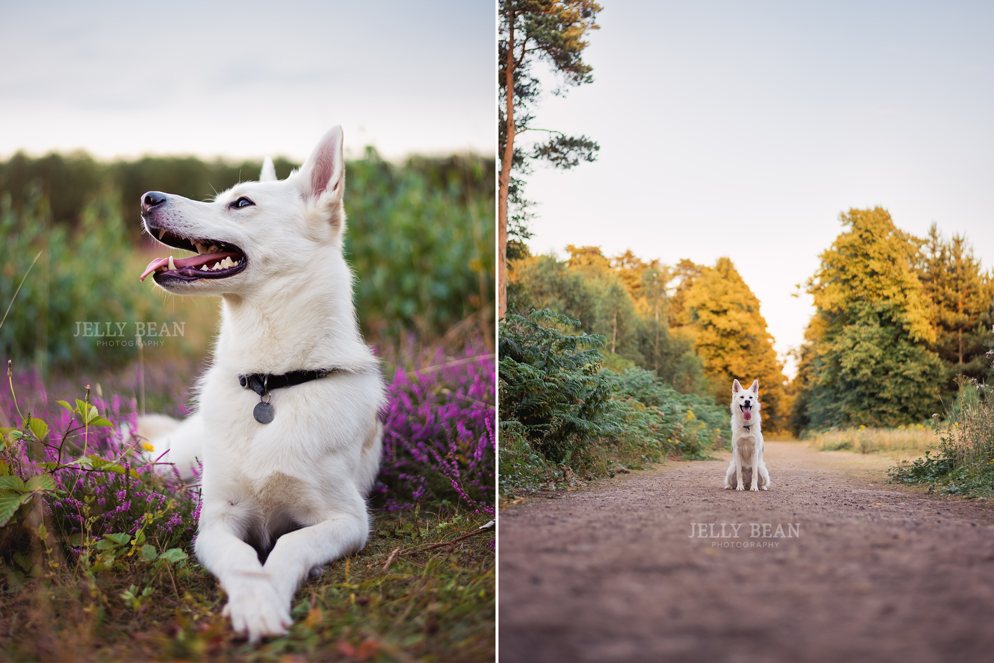 dog sitting on heathland