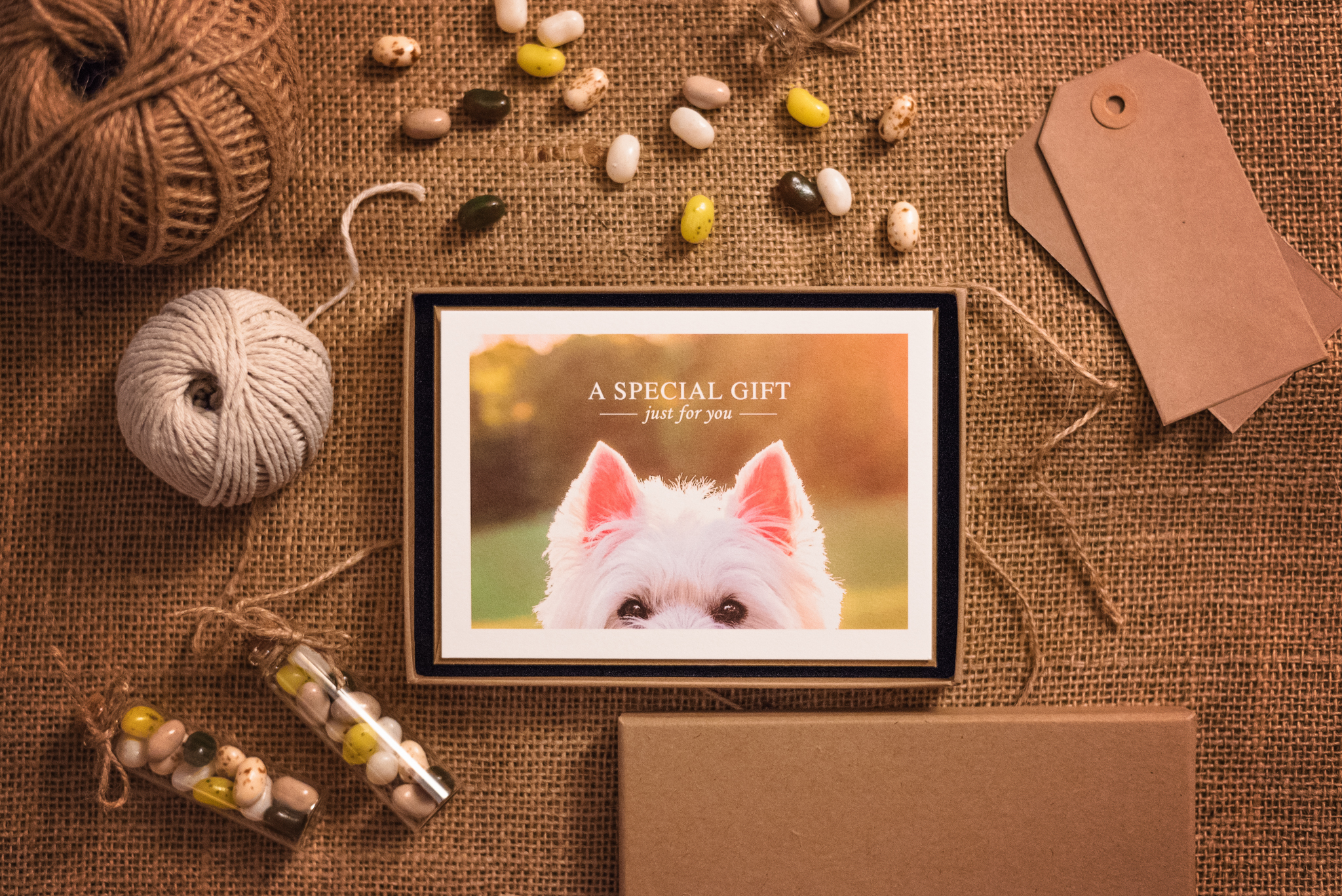 pet photography gift certificate