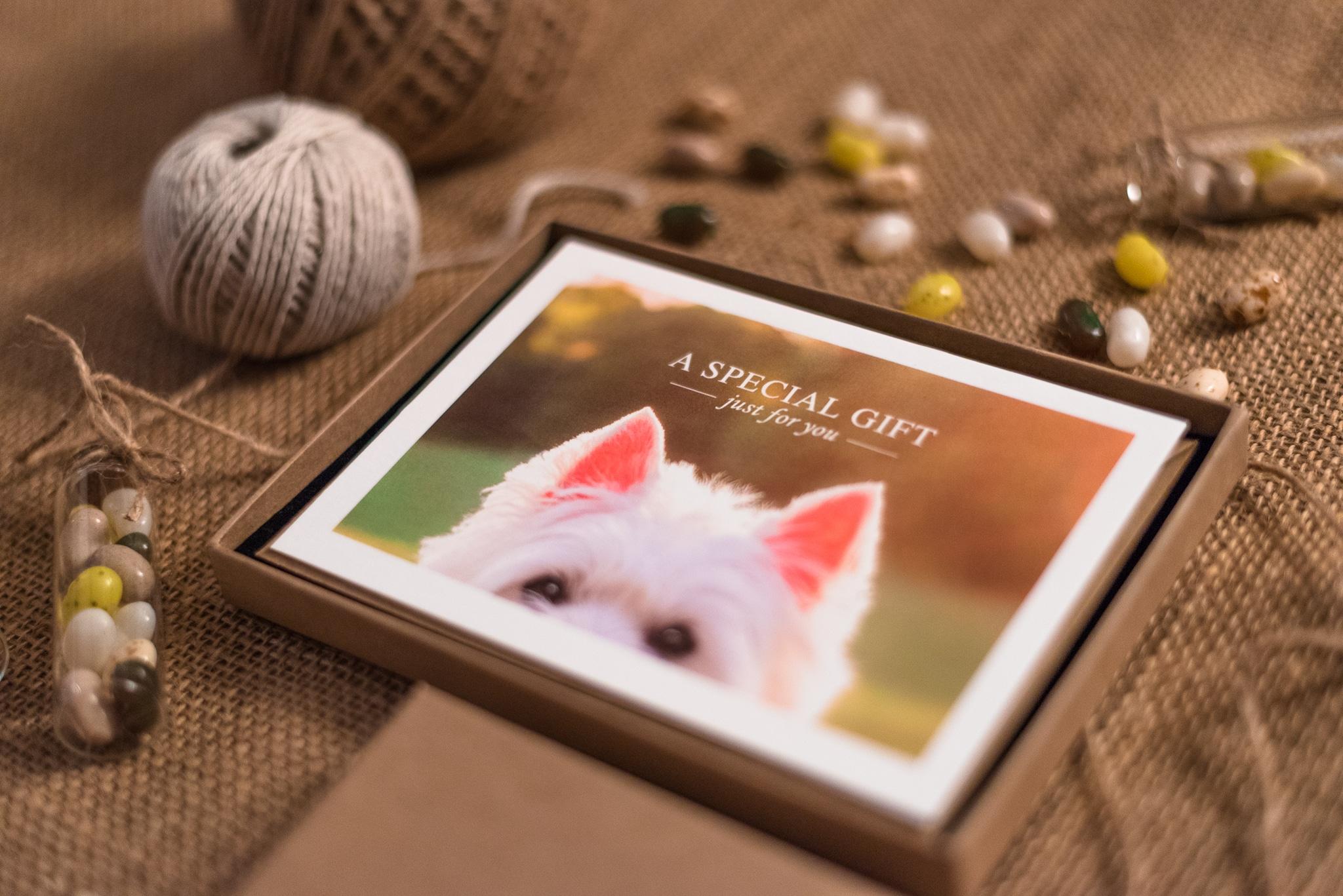 Northamptonshire pet photographer