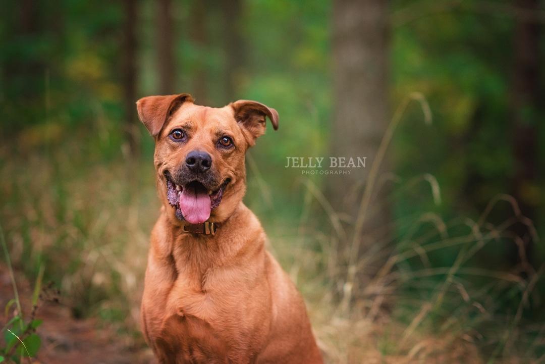 BRUNO | WELLINGBOROUGH DOG PHOTOGRAPHY