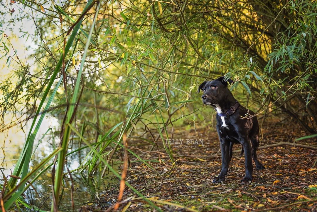 puppy standing under a tree