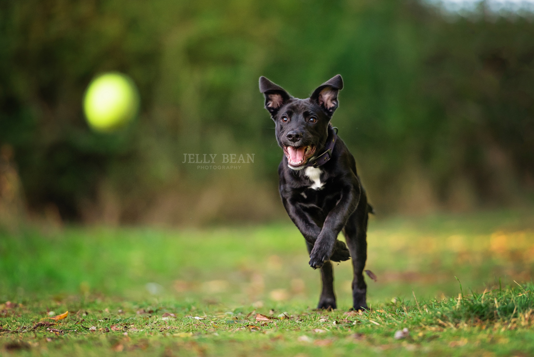 puppy chasing a ball