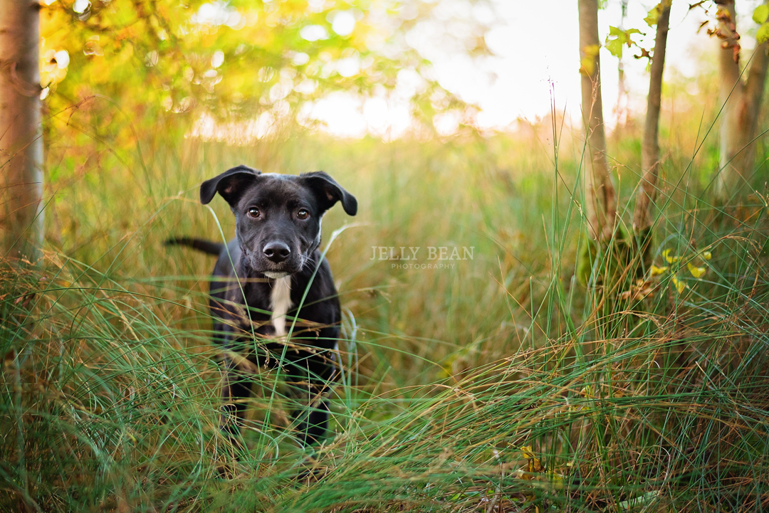 puppy standing in tall grass