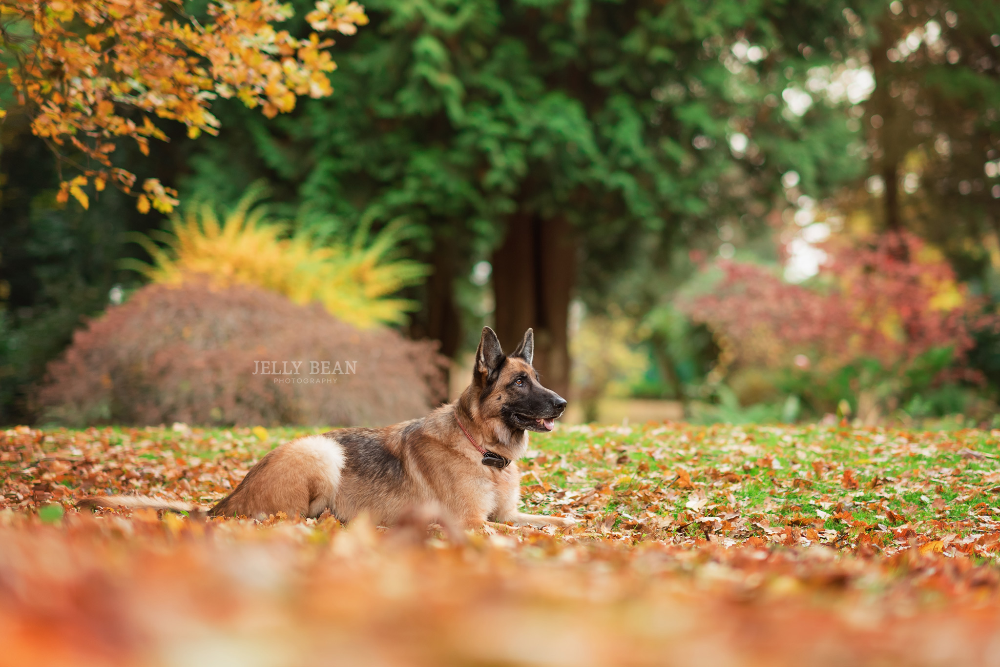 Dog lying down in park