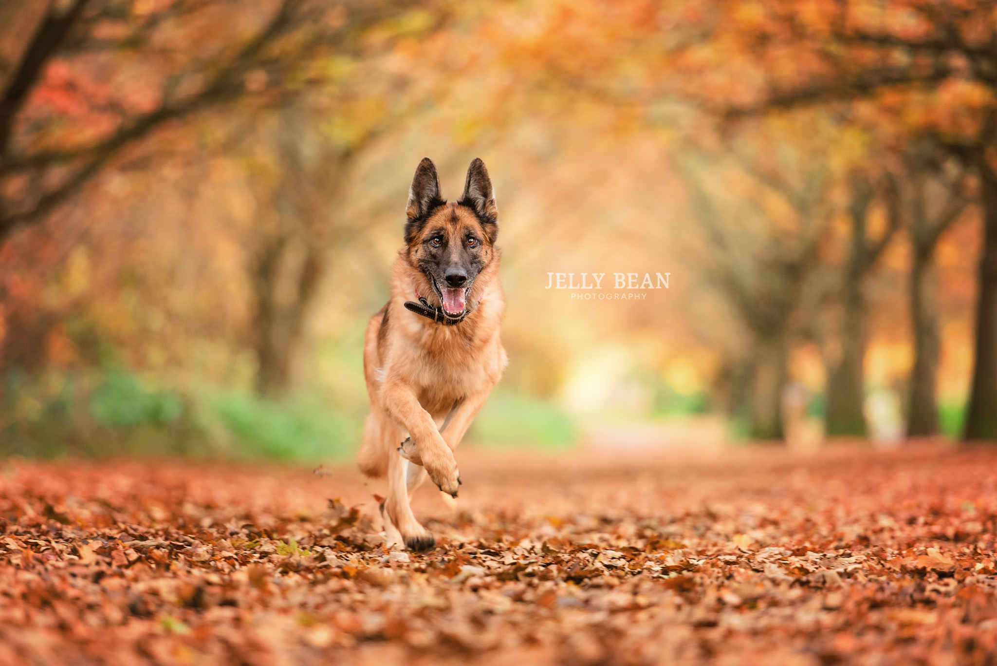 PEPE | NORTHAMPTON DOG PHOTOGRAPHY