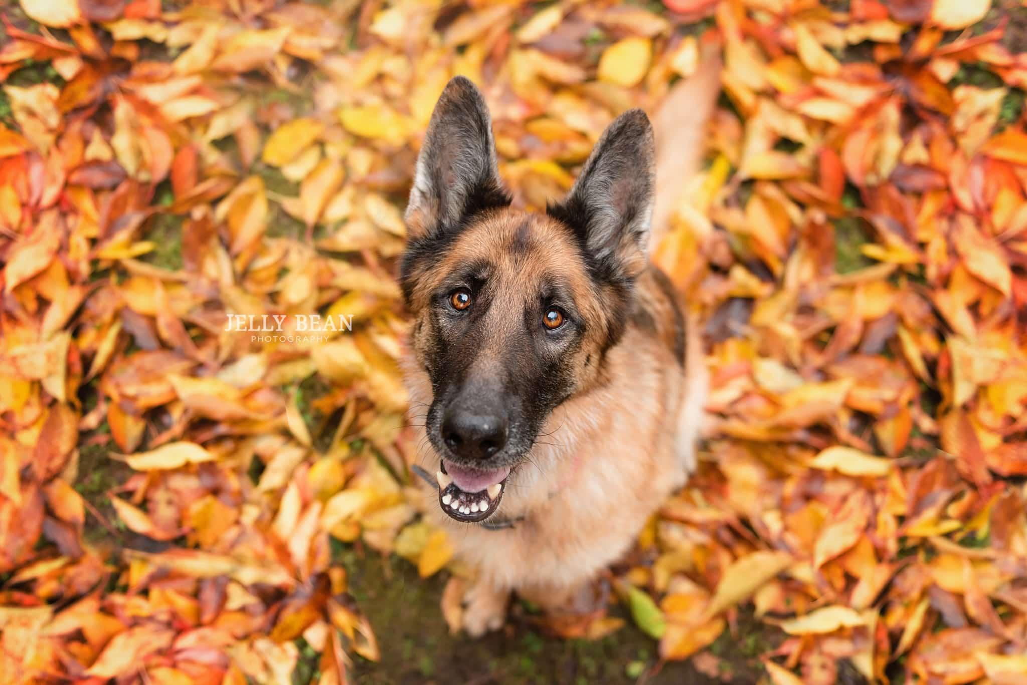 Wide angle shot of dog