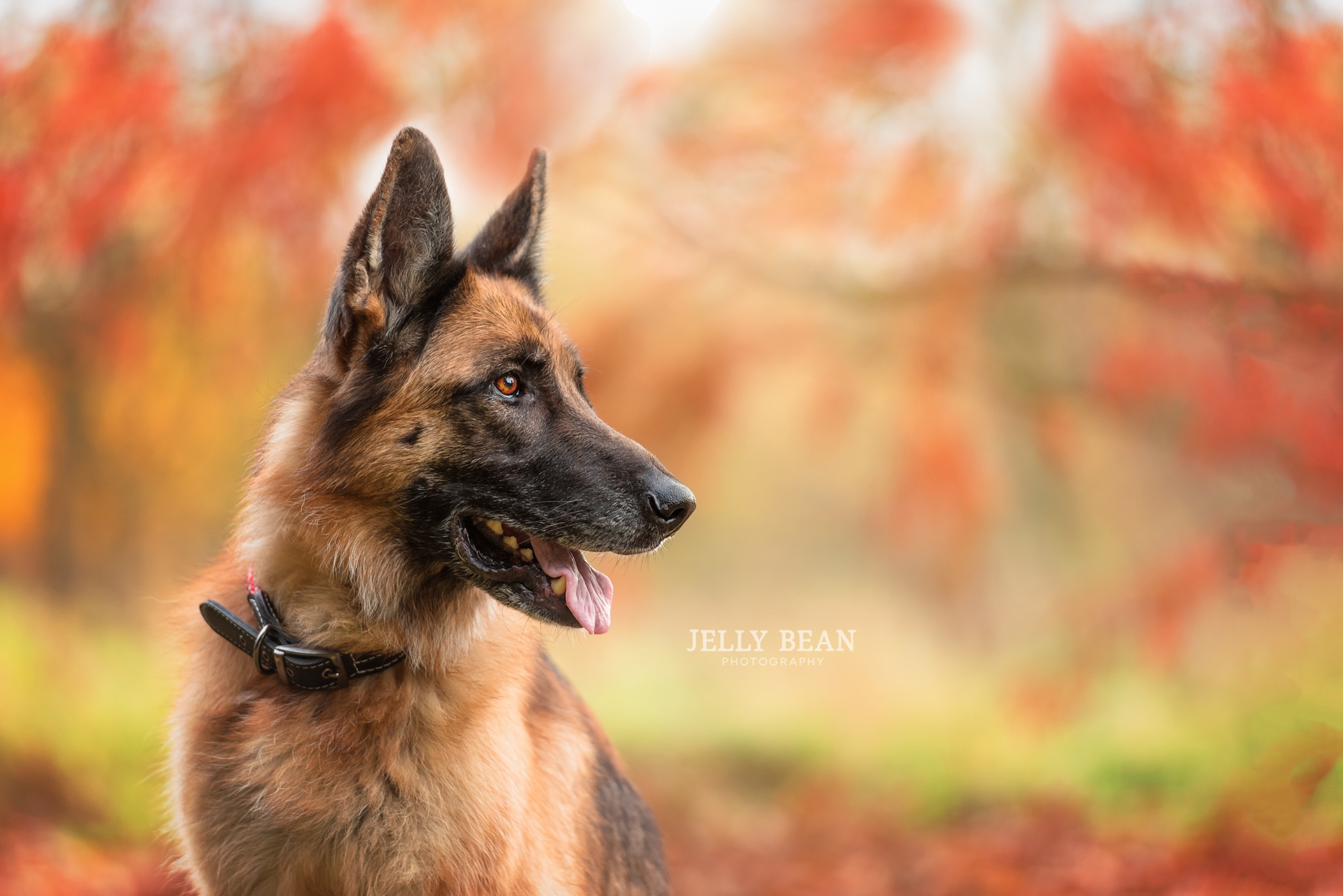Dog with orange leaves in background