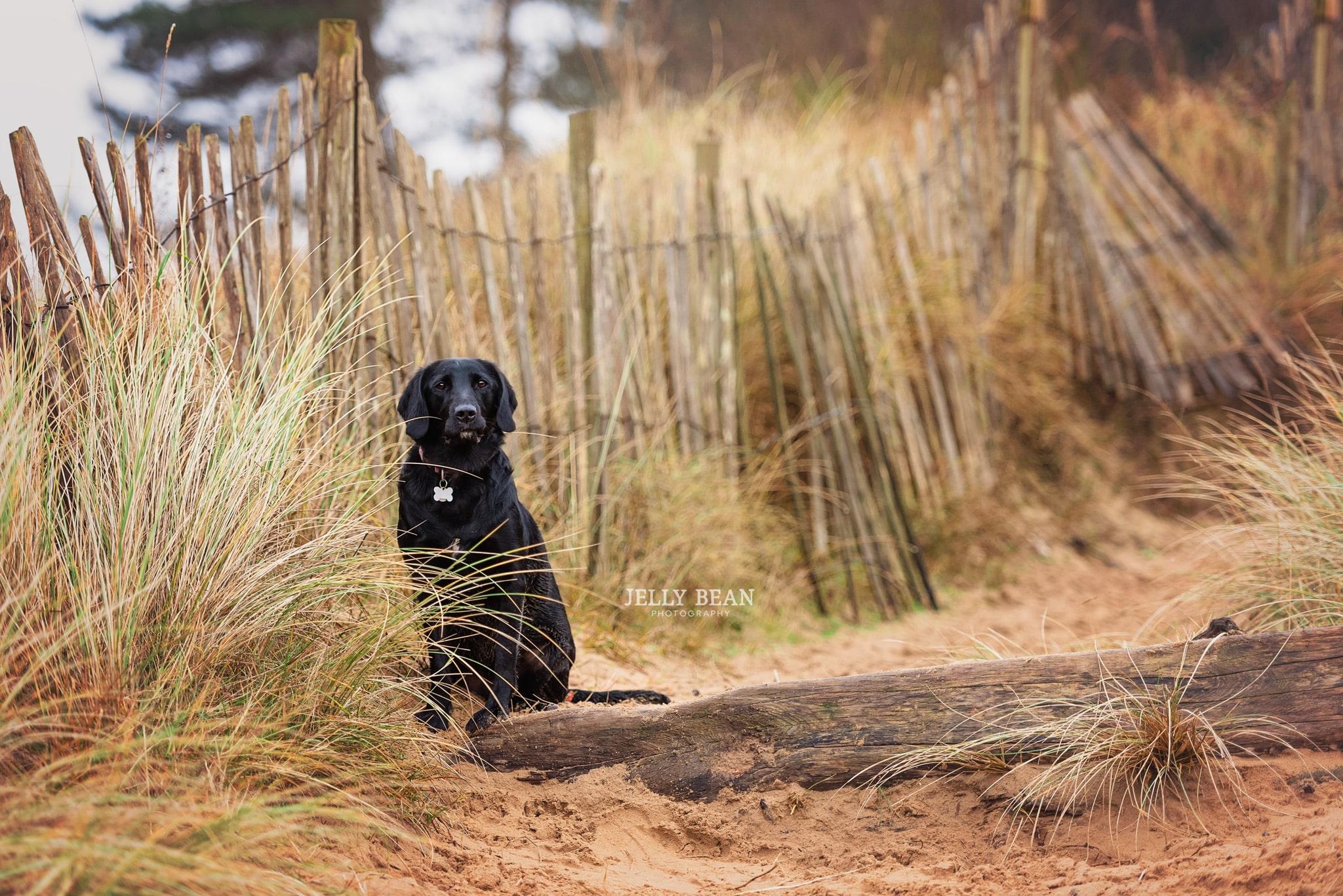 Black dog sitting by fence