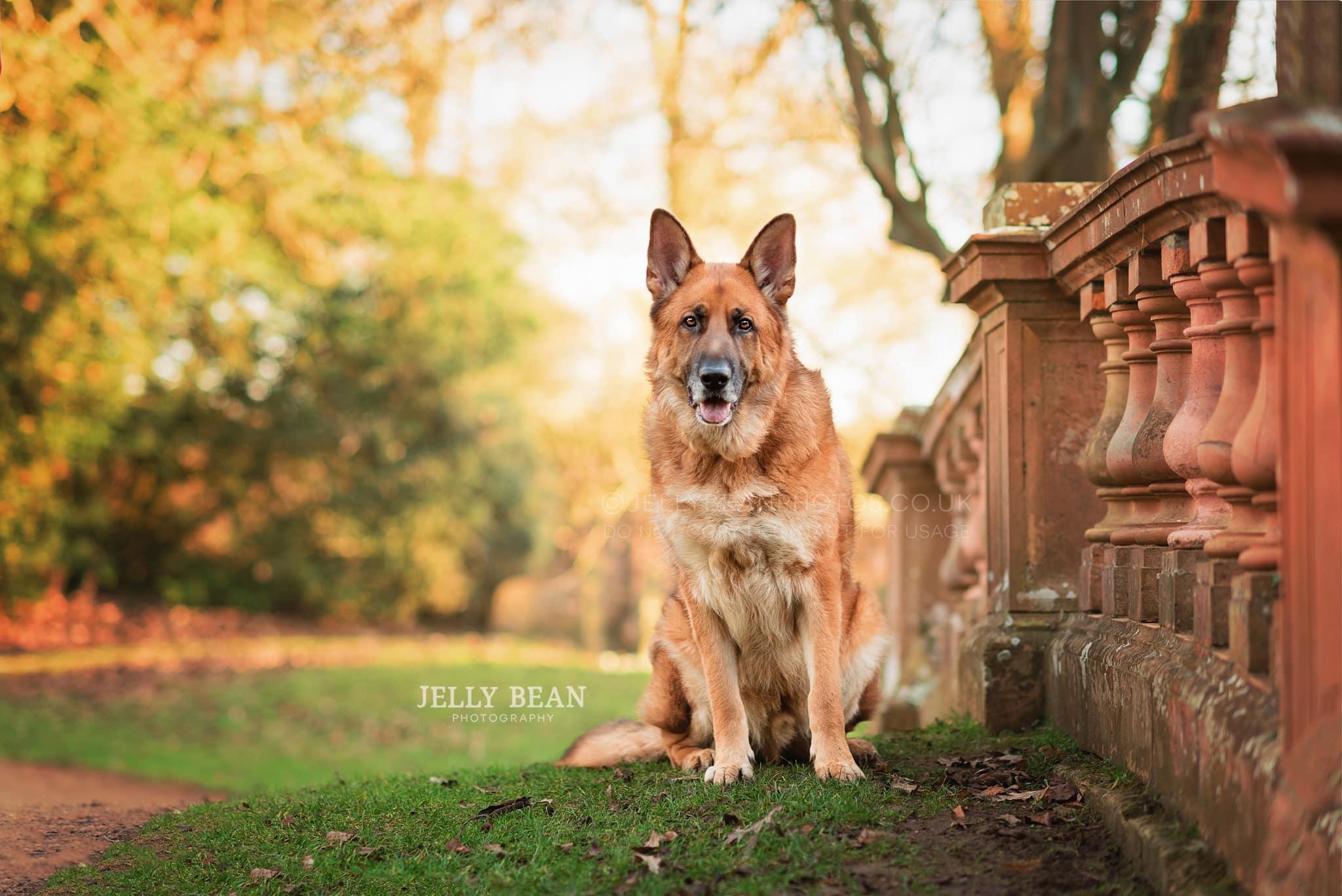 Dog sitting on stone bridge