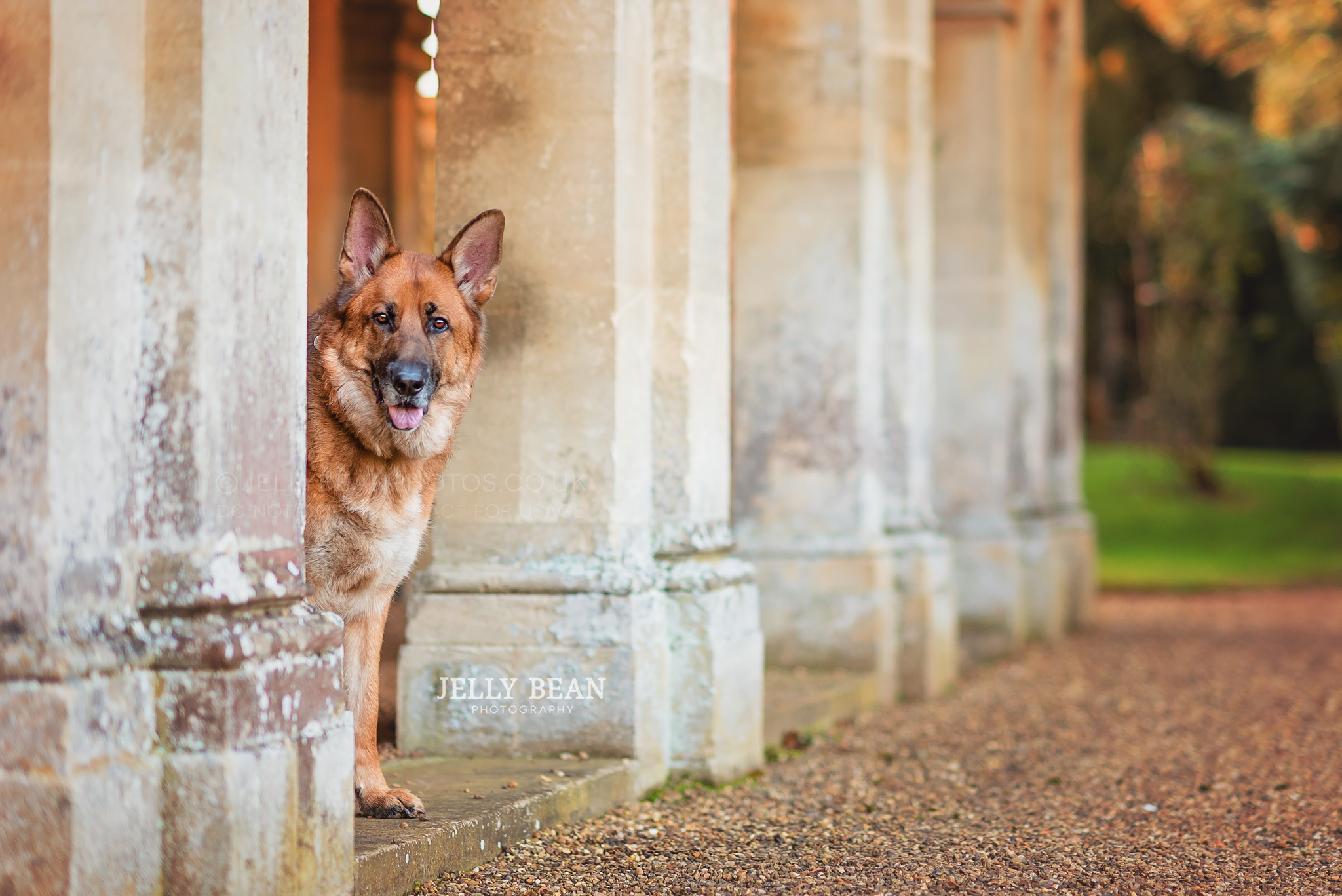 German shepherd dog standing among pillars