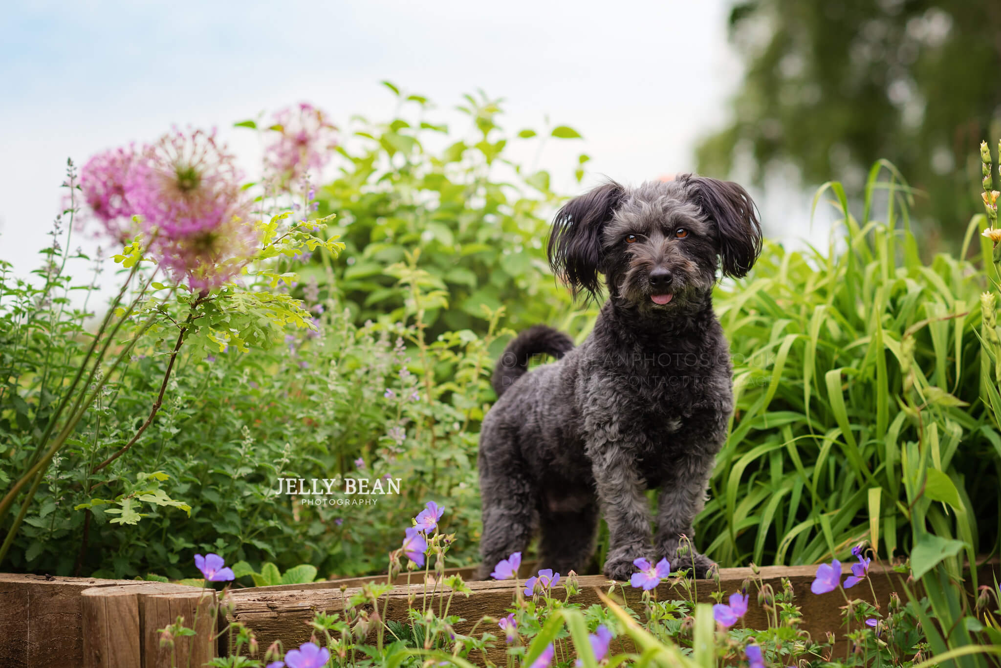 black dog in flowerbed