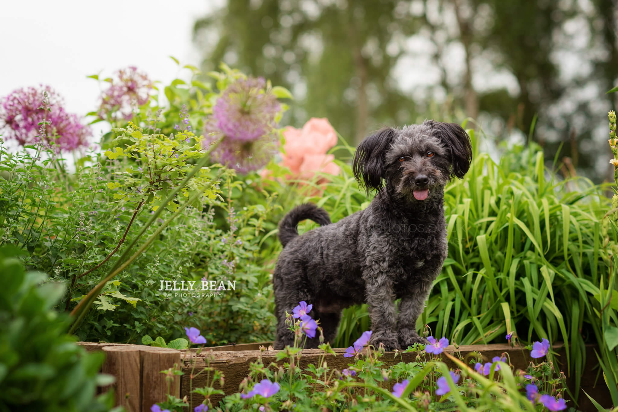 little dog standing in flowers
