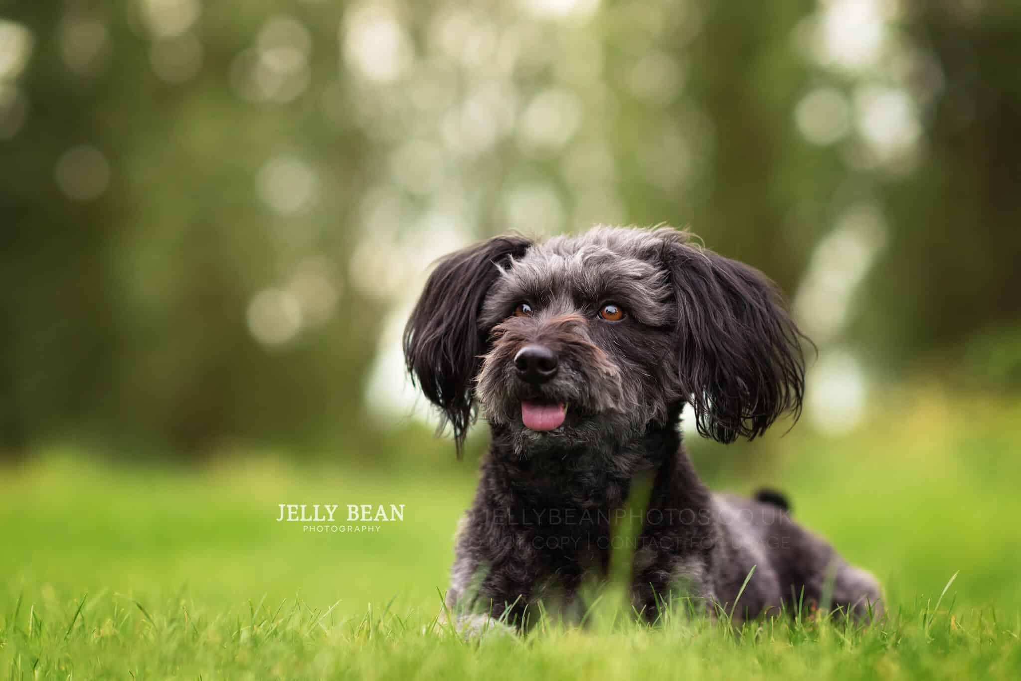 small dog lying on grass