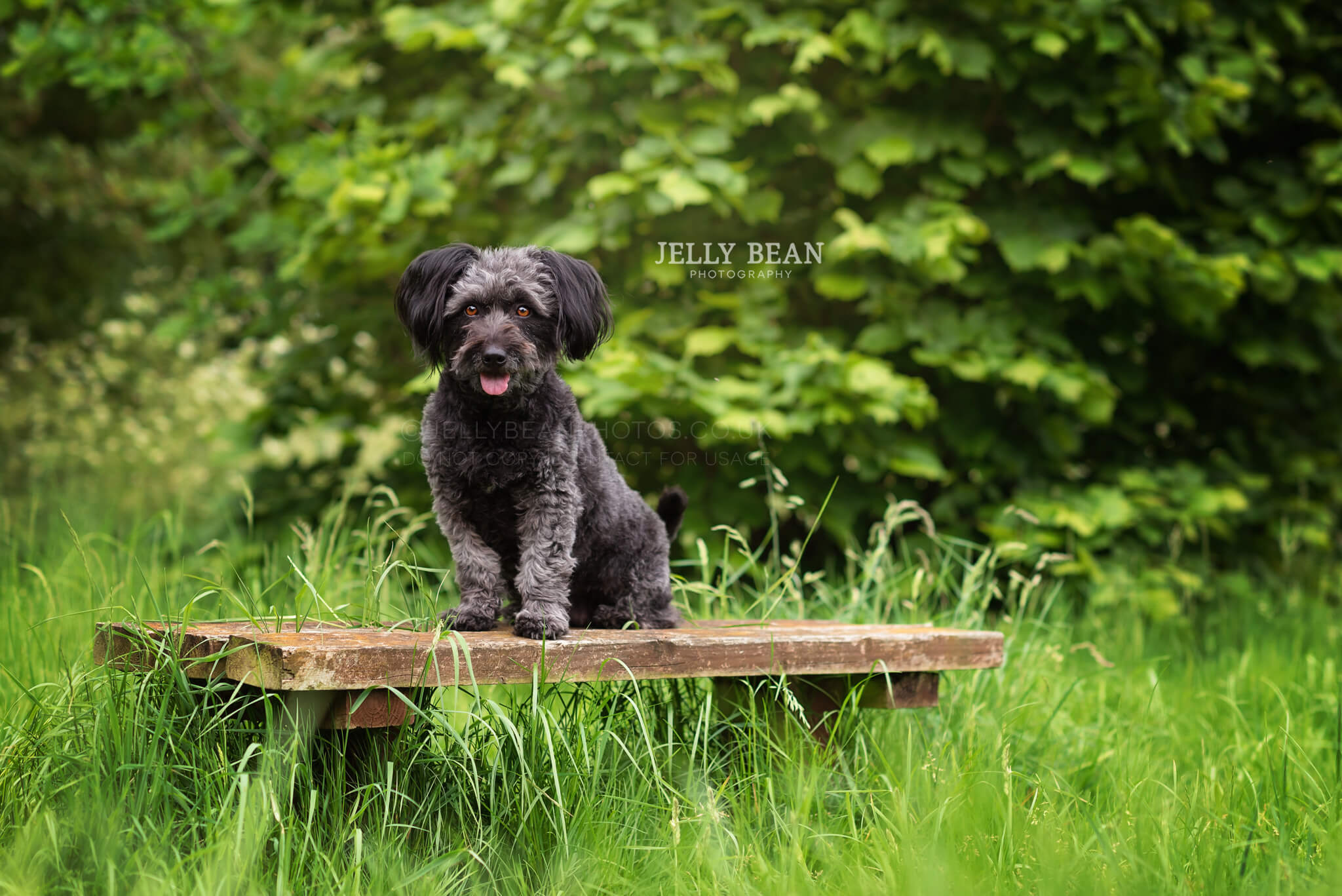 black dog sitting on bench