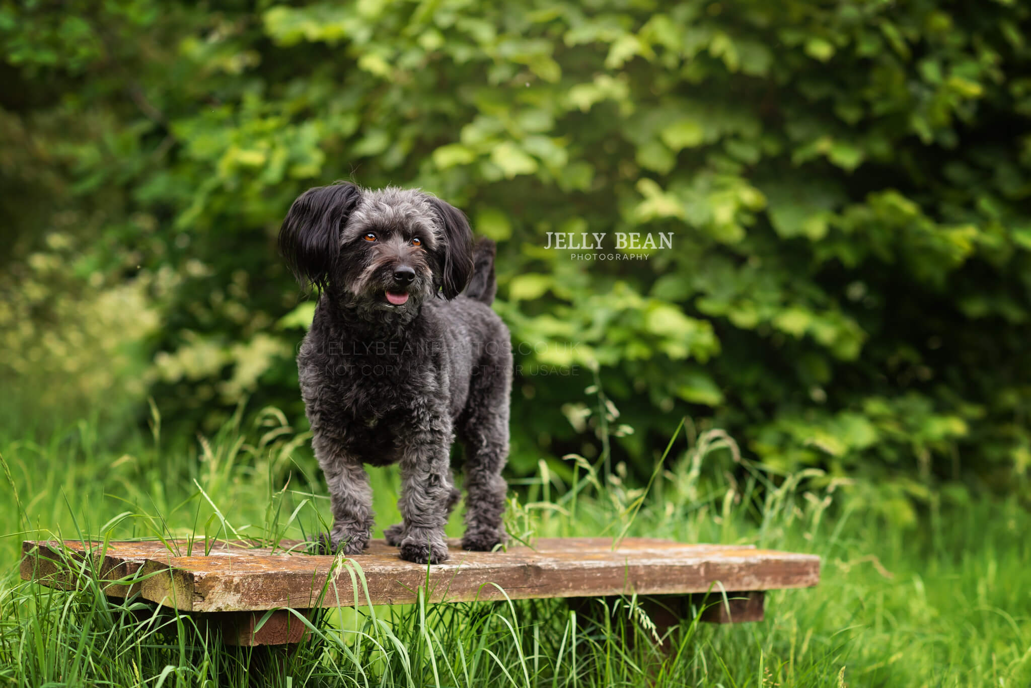 little dog standing on bench