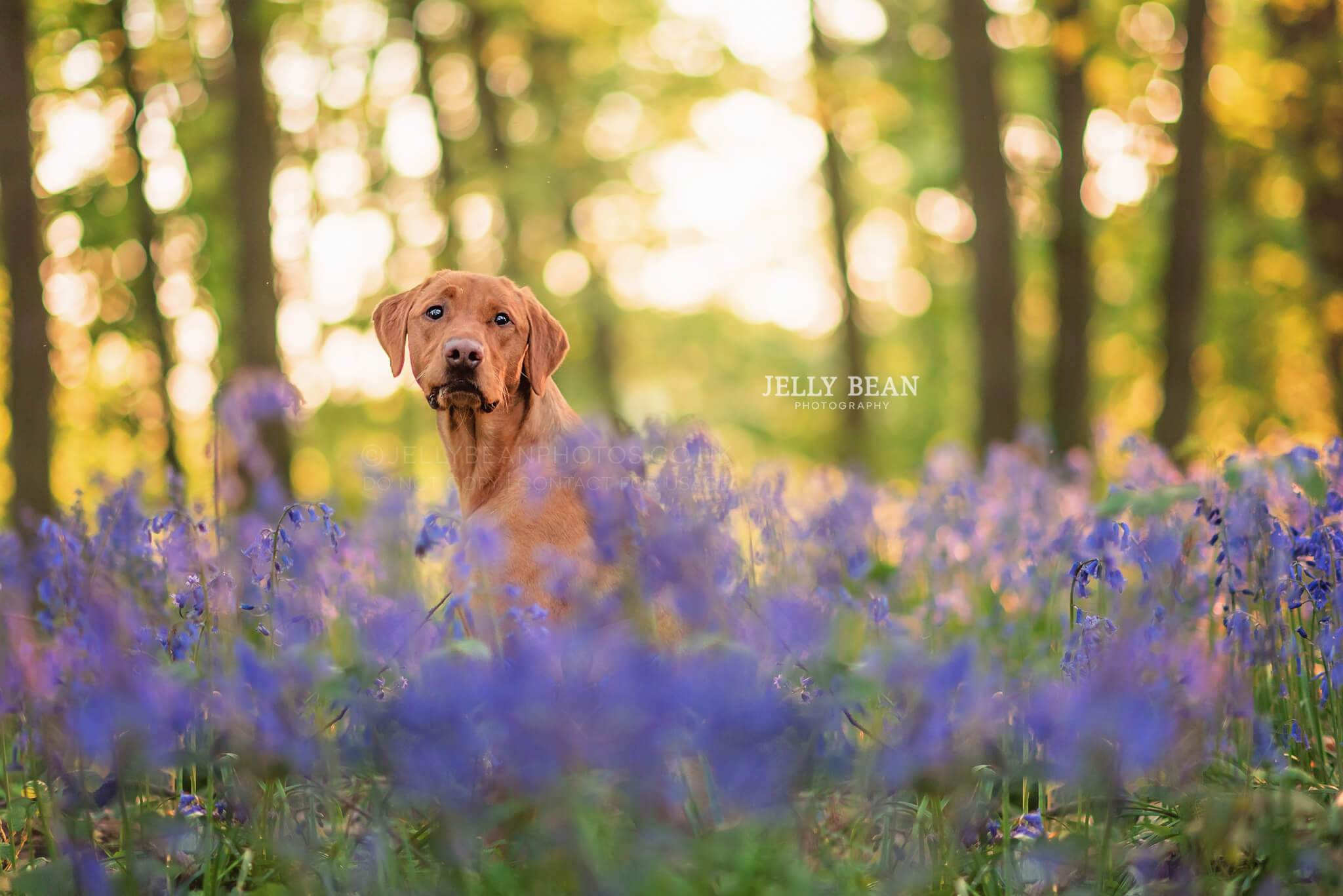 Pet photography Northamptonshire