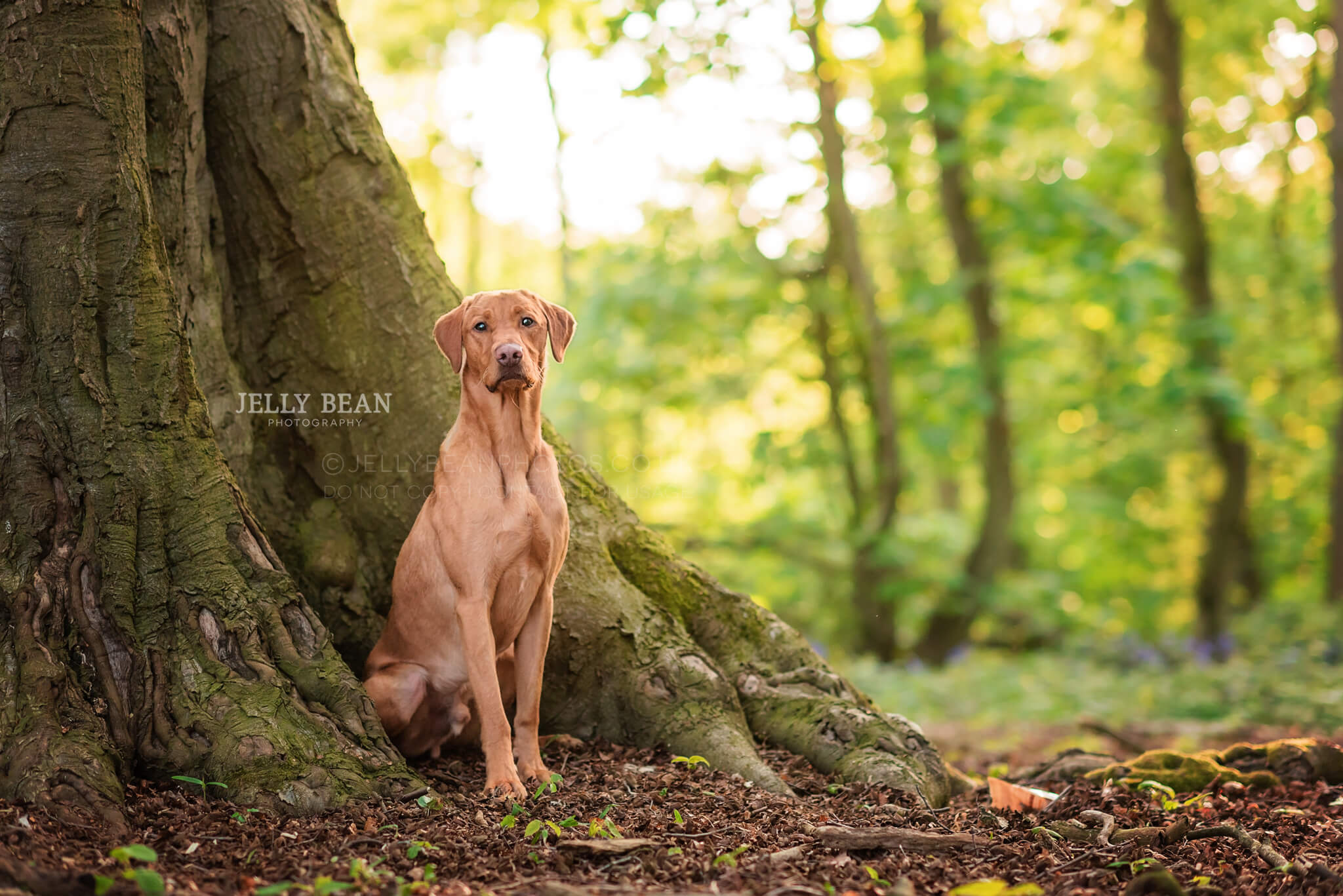 Dog sitting at the trunk of a tree