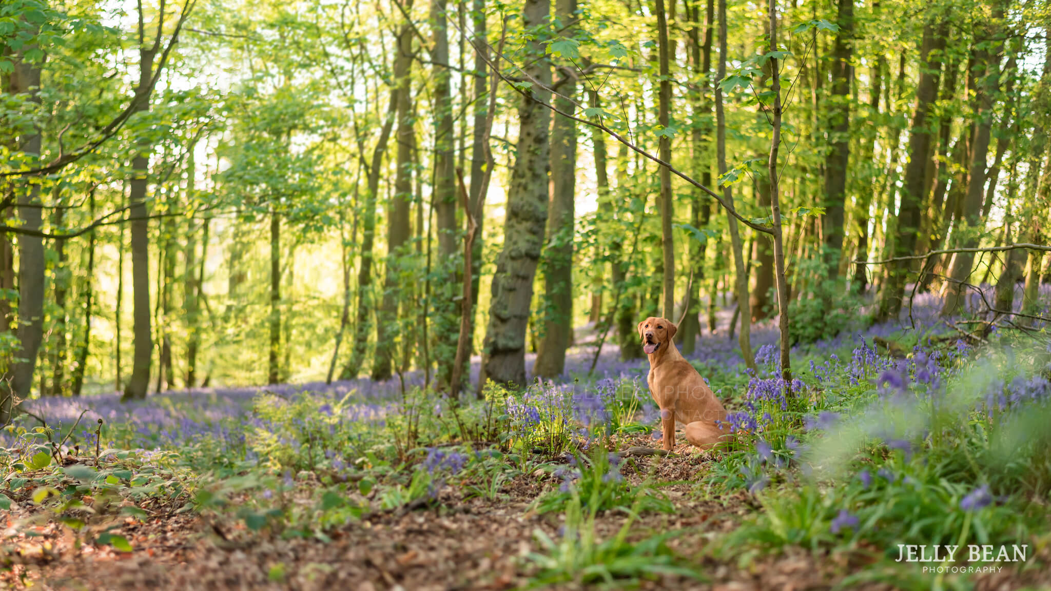 Panroamic shot of dog in the woods