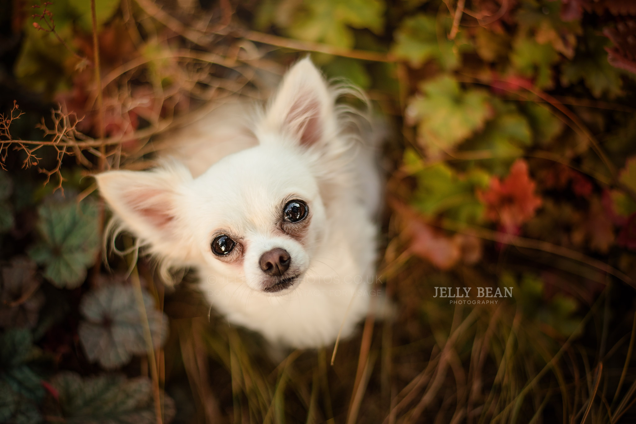 PHOTOGRAPHING SMALL DOGS   ELVIS & MARILYN
