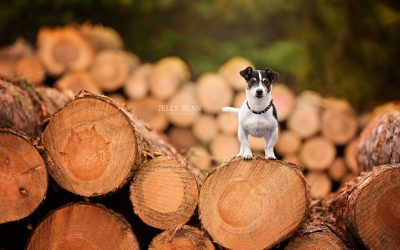 A WOODLAND WALK | TOBY THE JACK RUSSELL