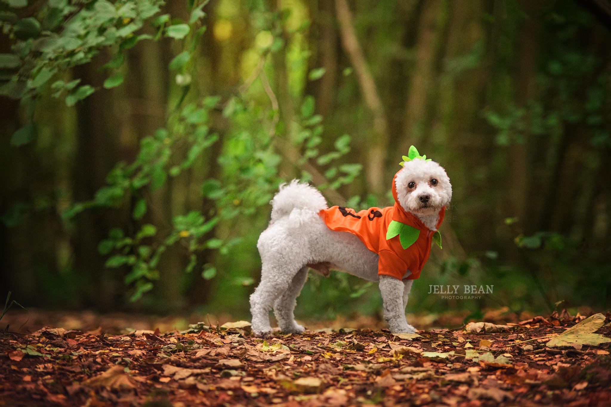 White dog wearing halloween outfit