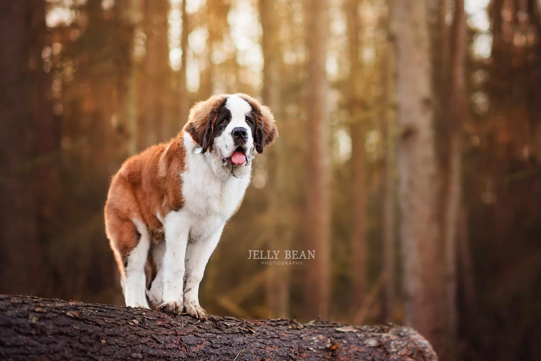 Big puppy standing on log