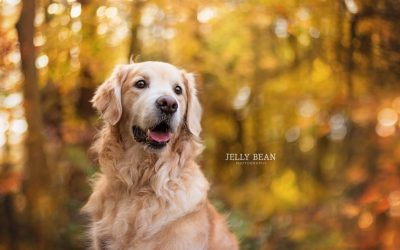 PADDY, TILLY & POPPY | DOG PHOTOGRAPHY