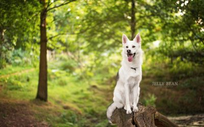 THE DOG TRAINING CHALLENGE: ARE YOU IN?
