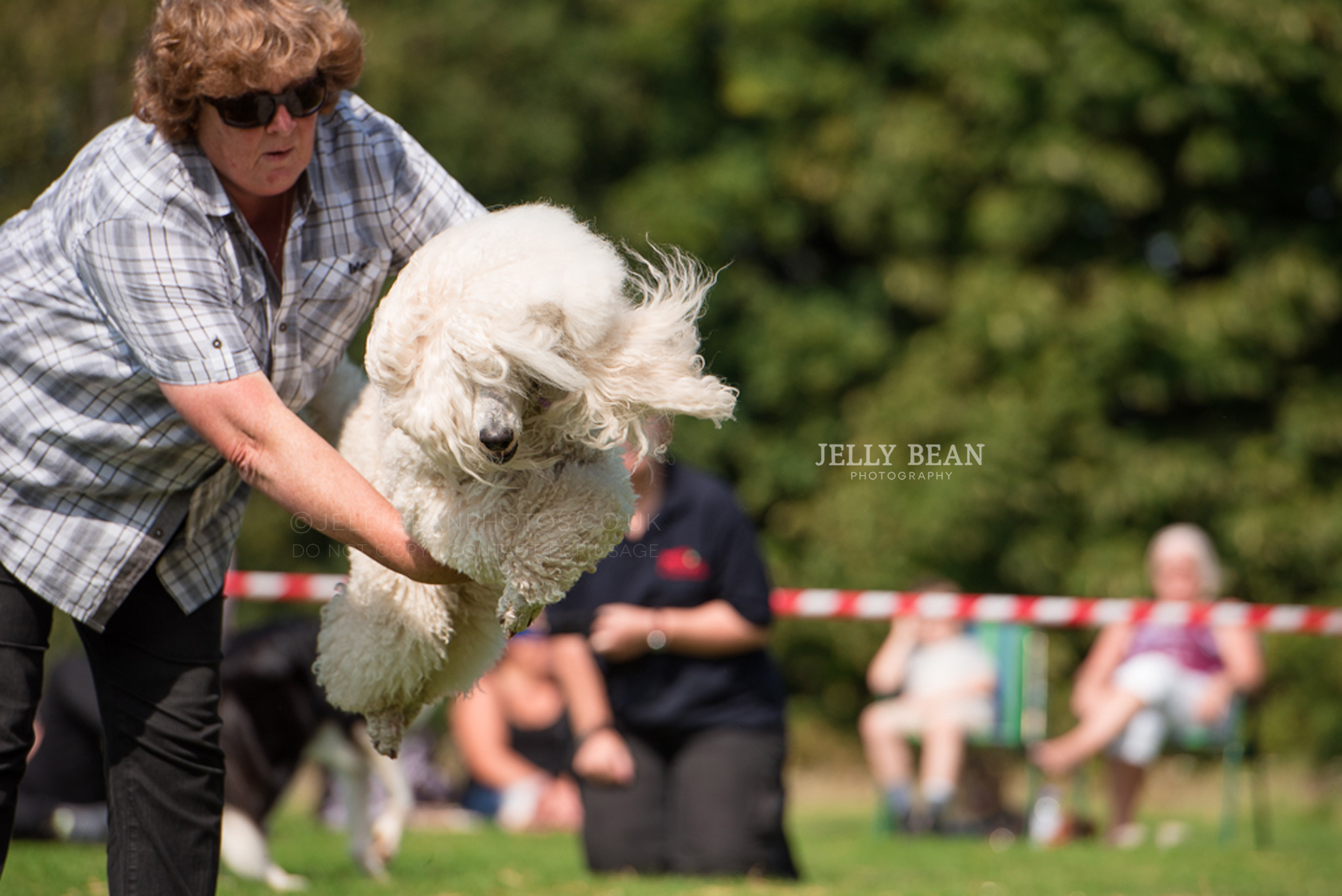 Poodle jumping through owners arms