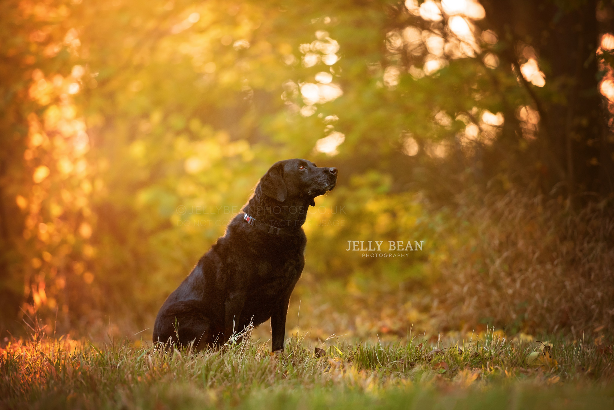 black dog in woods