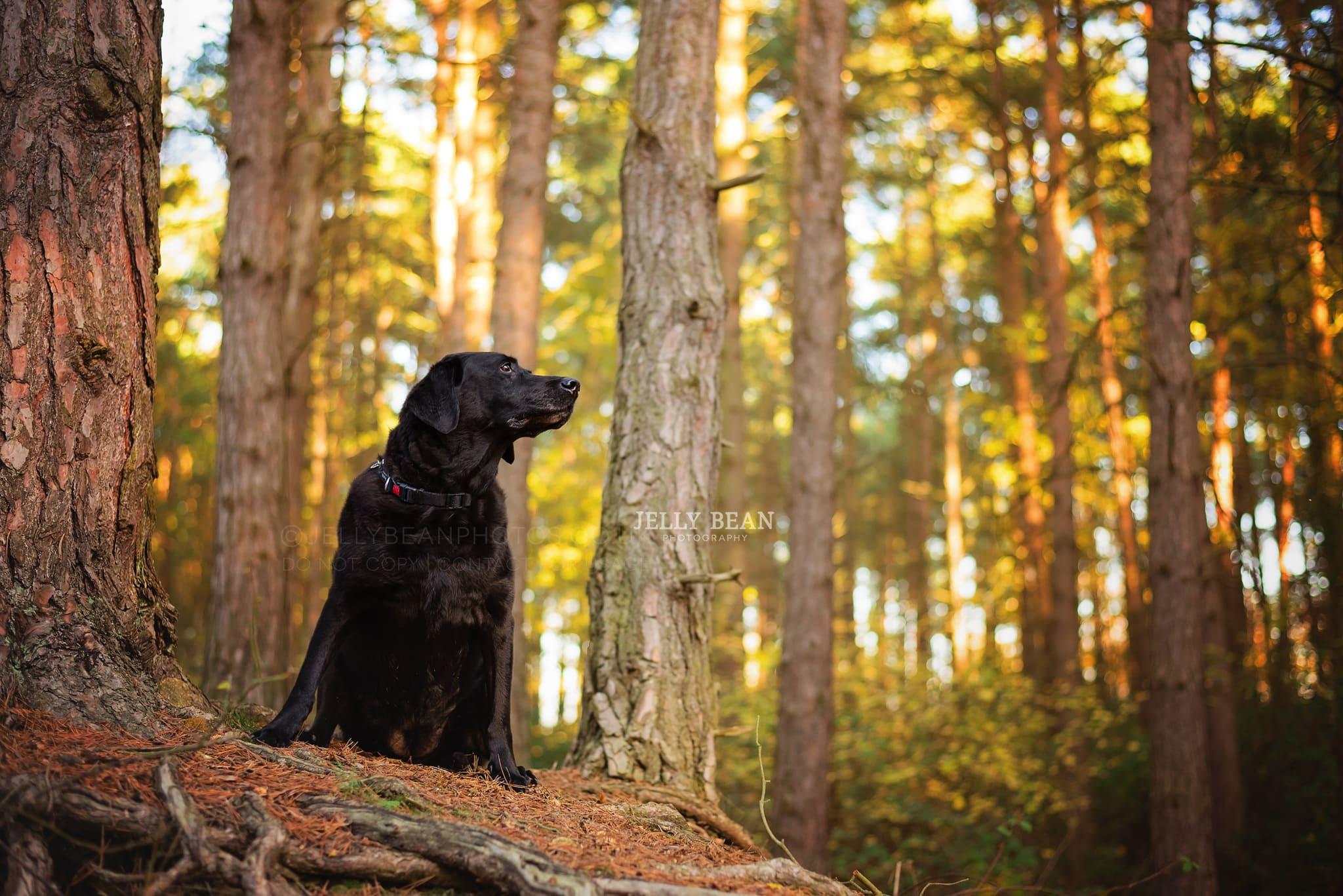 black dog sitting on hill