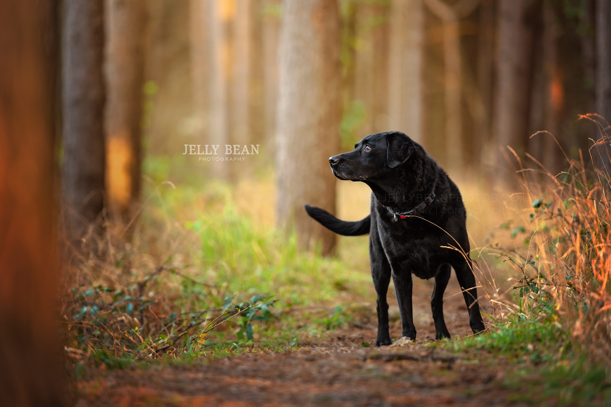black dog standing in trees
