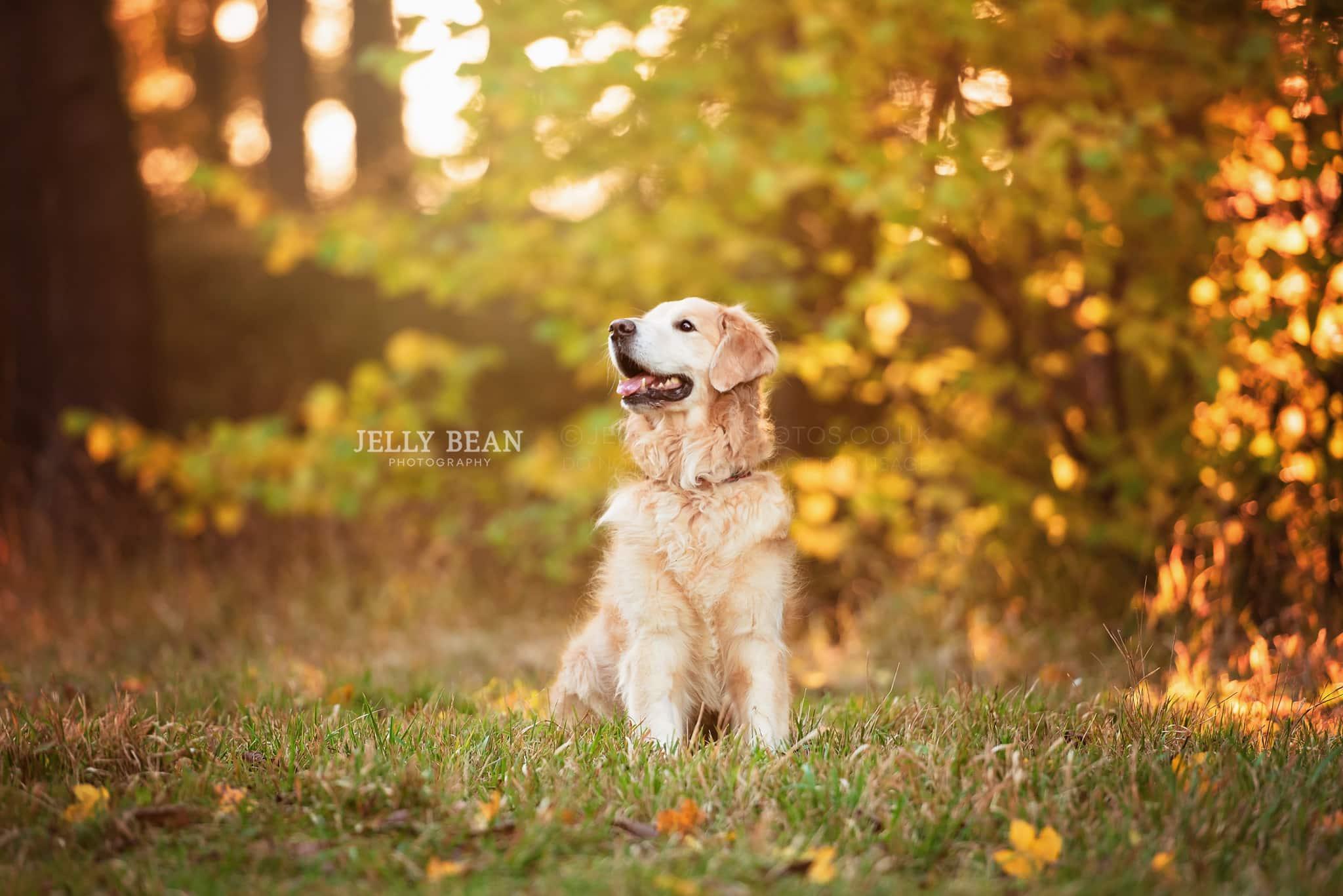 dog sitting in sunshine