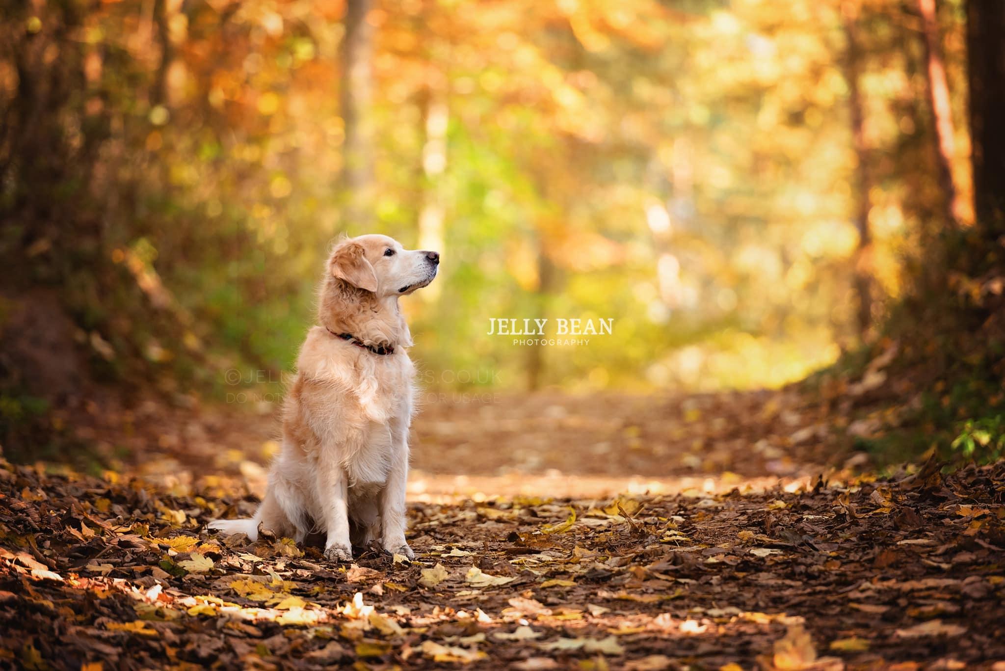 dog sitting on autumn trail