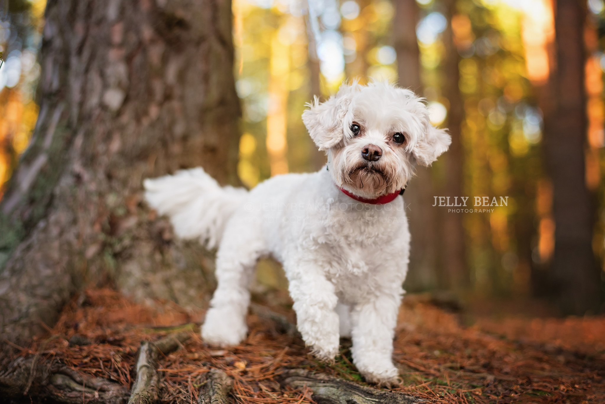 little white dog standing by tree
