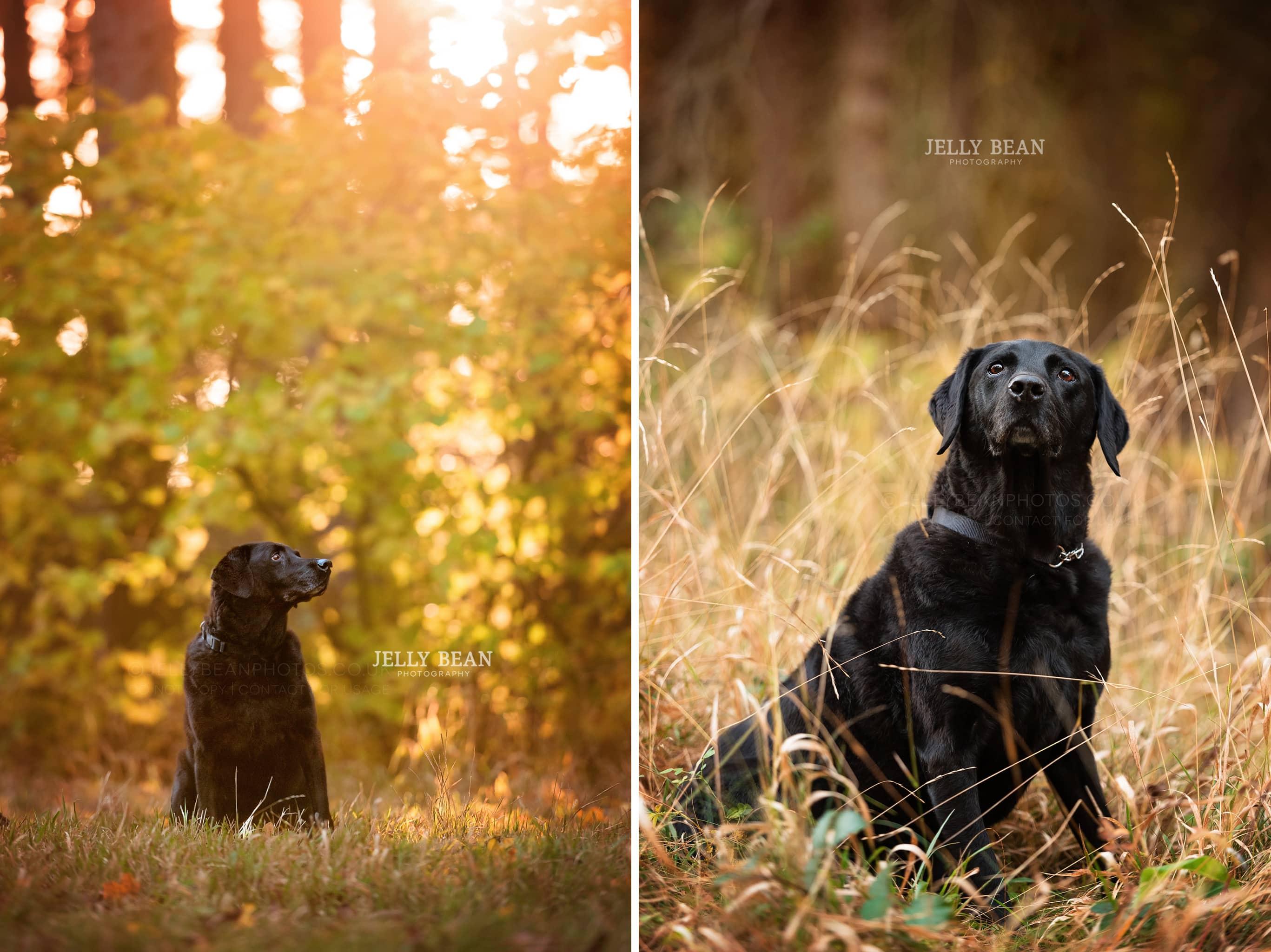 Northamptonshire dog photography