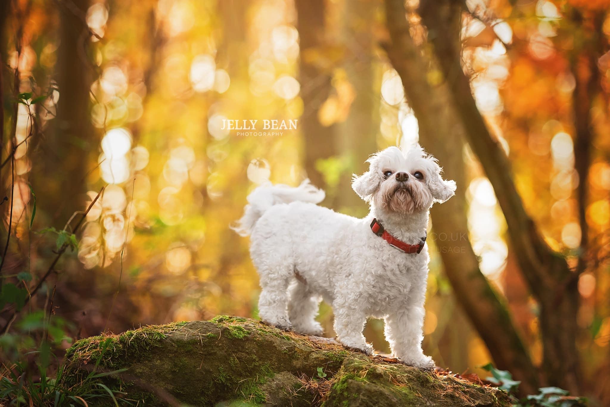 White fluffy dog on rock