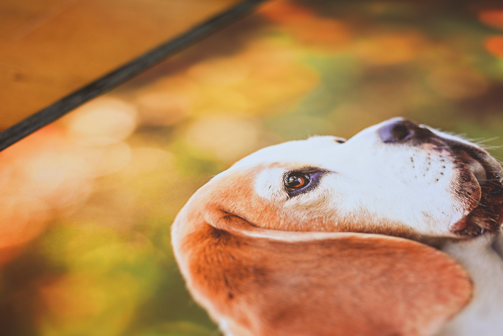 Framed-canvas-beagle-detail