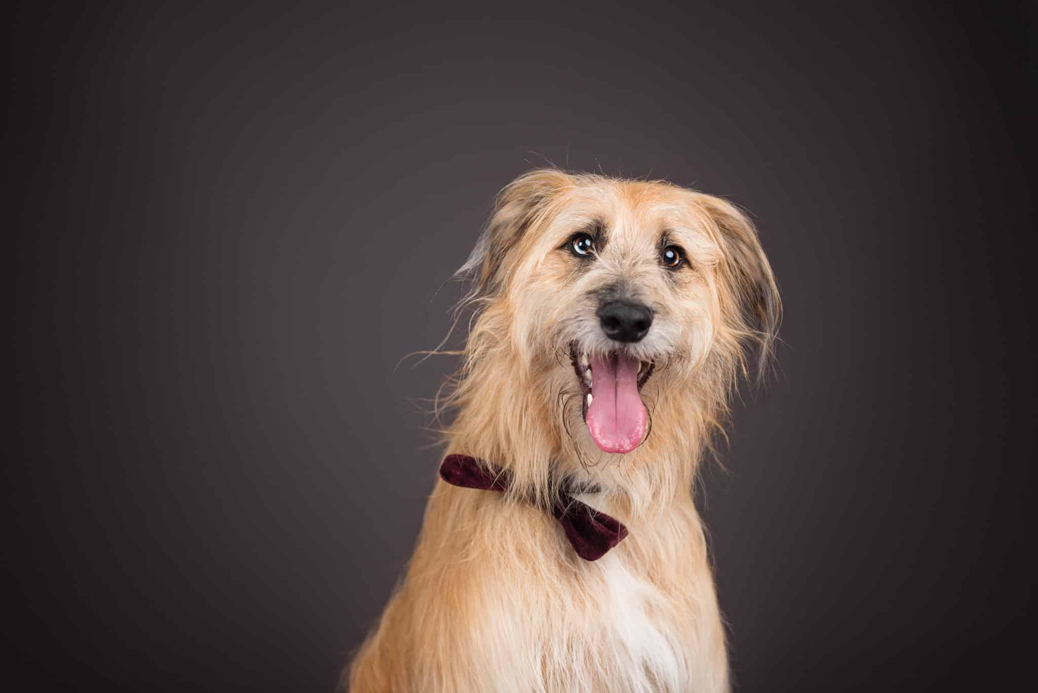 brown-crossbreed-dog