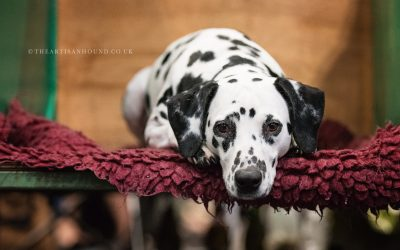 CRUFTS & THE BEAUTY OF DOGS